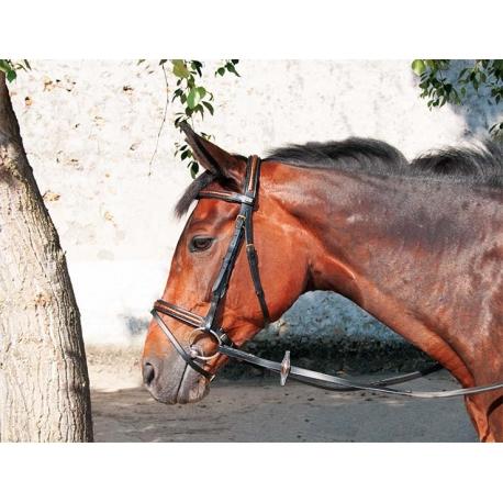 Bridon imitation croco tdet - Only fools and horses bonnet de douche ...