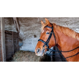 Pollock Dressage Bridle