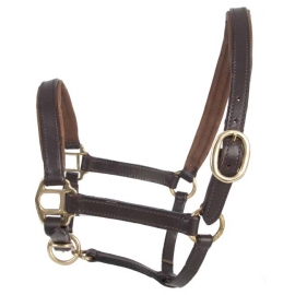 Foal Leather Halter